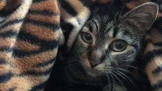 猫のキャットフードの与え方|ミックスフィーディング