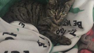 猫と暮らすおうちの掃除とにおい対策