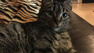 猫がストレスを感じたときの解消法!快適な暮らしのために