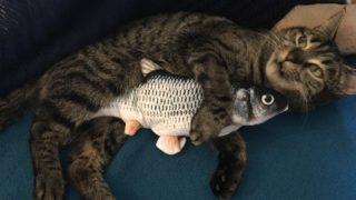 猫の保険は必要?加入を検討したらチェックすること